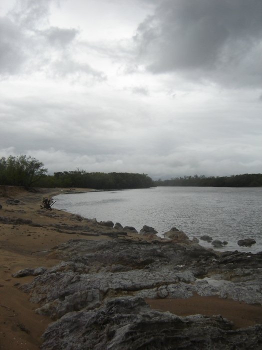 Althaus Creek at Saunders Beach where mangroves line both sides in the intertidal zone. March 2011.