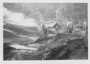Whaling at Tangalooma