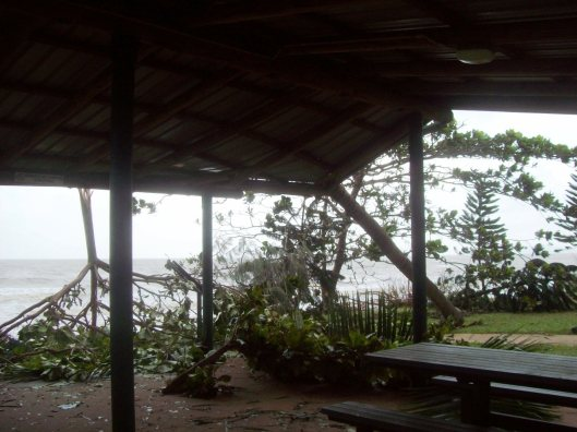 Image 10. After Cyclone Yasi. Image kindly contributed Terry Chapman.