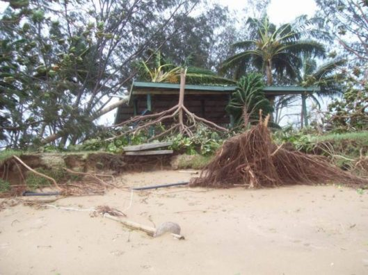 Image 11. Interpretive signage after Cyclone Yasi. Image kindly contributed by Terry Chapman.