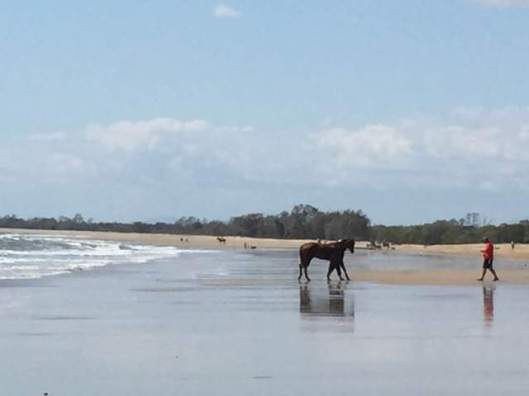 "Image 1. Horses on Saunders Beach, taken 2015. From the early 1880s the Saunders family resided at Springfield, a 2 100 hectares property which nowadays takes in the current Saunders Beach. The Saunders used to ride <a href=""https://saundersbeachhistoryproject.com/2015/12/31/pioneers-4/"" target=""_blank"">socially</a> on the beach and no doubt George Saunders used to train his racehorses on the beach."