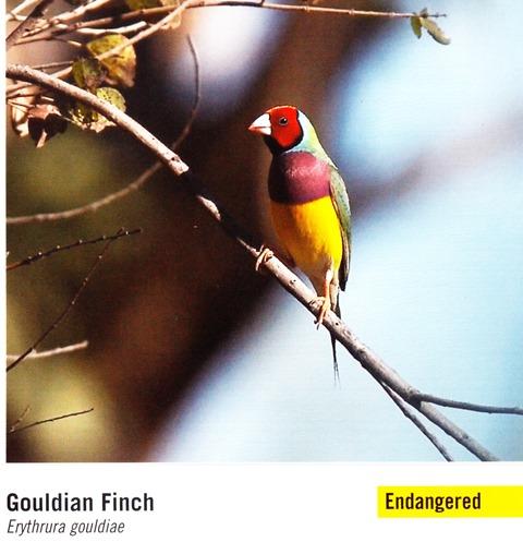Image 7. Woodland Birds page 52