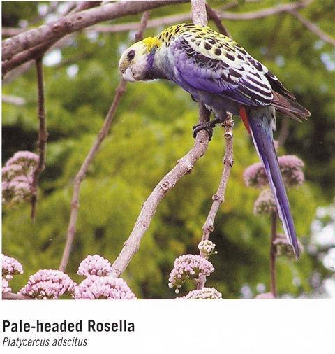 Image 6. Woodland Birds, page 19